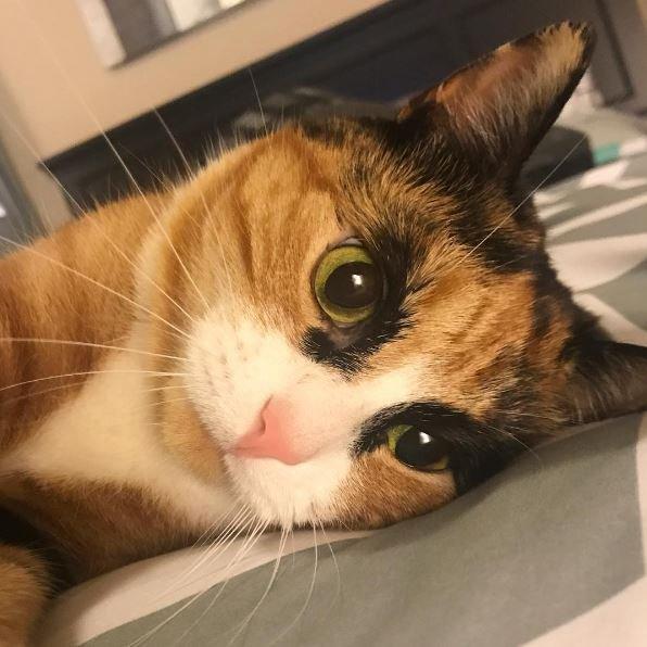 Lilly Il Gatto Con Lo Sguardo Sempre Pronto A Giudicare Bigodino