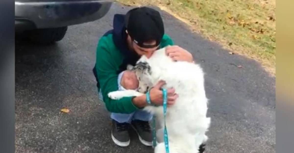 Il cane Zig non riesce a smettere di abbracciare il suo nuovo amico umano