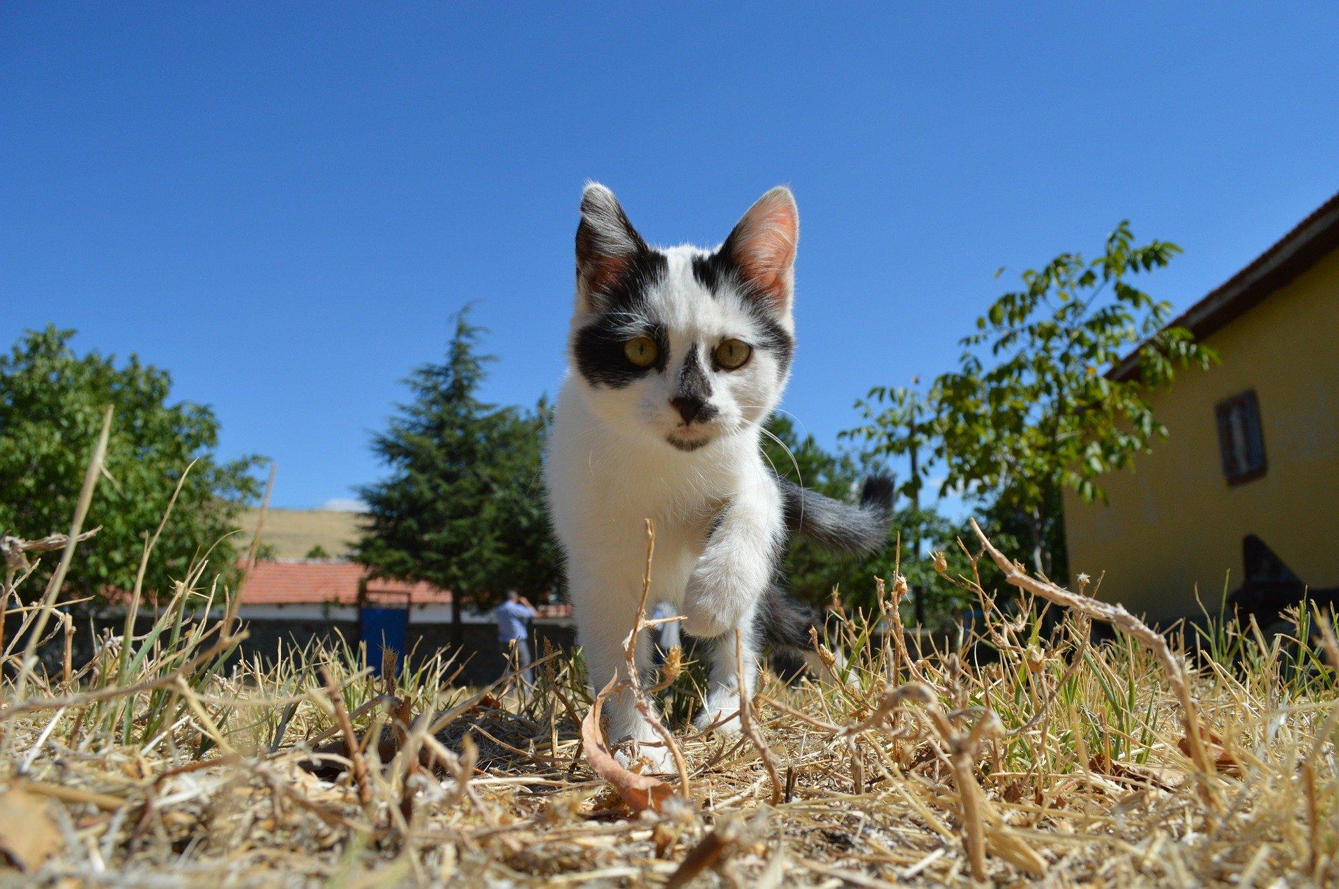 Gattino in esplorazione