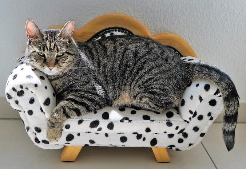 Gatto re