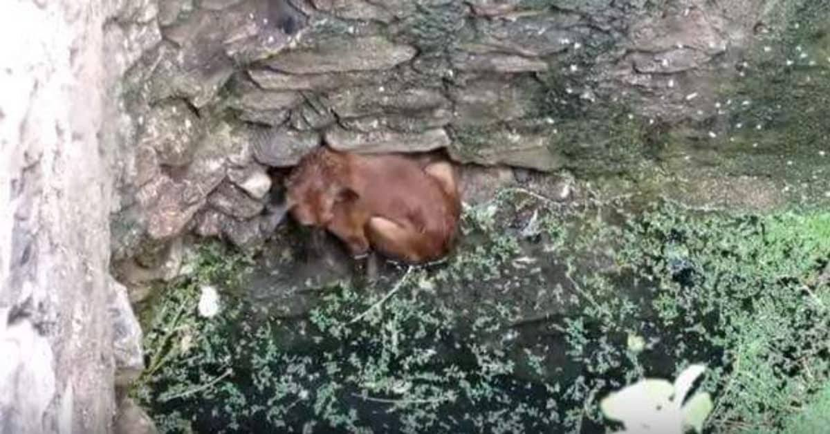il-salvataggio-del-cagnolino-caduto-nel-pozzo-in-India