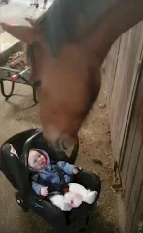 Red-il-cavallo-calma-la-bambina-che-stava-piangendo