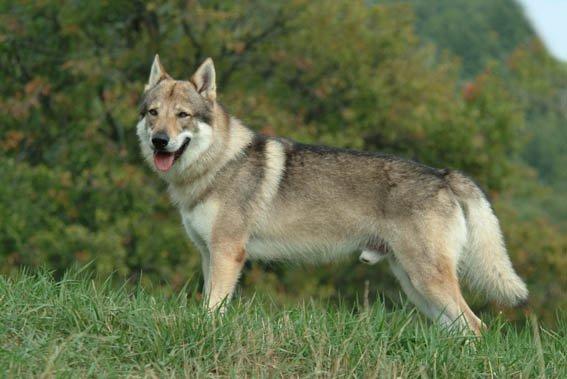donna-cerca-di-uccidere-il-suo-cane-nella-foresta 1