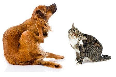 antiparassitari-gatto-cane