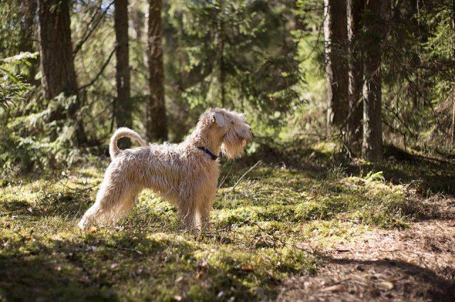 donna-cerca-di-uccidere-il-suo-cane-nella-foresta