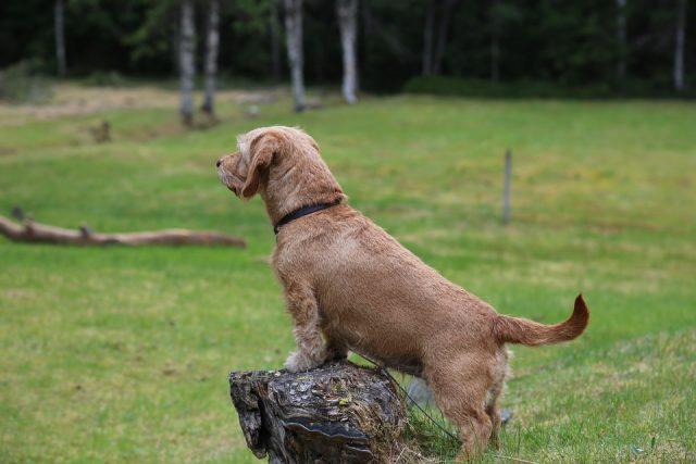 donna-cerca-di-uccidere-il-suo-cane-nella-foresta 2