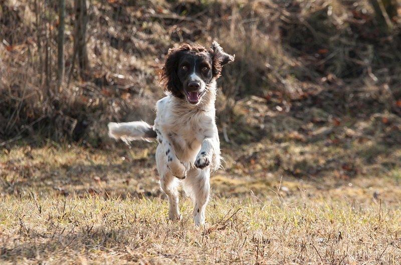 Un cane che corre nel bosco