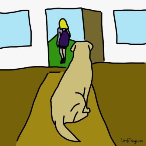 cane calmo
