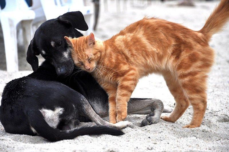 Gatto rosso che si struscia su un cane nero