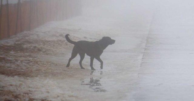 cane-salva-condannato