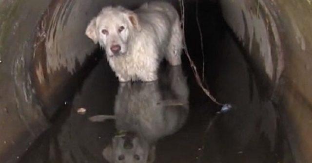 cane-tubo-drenaggio