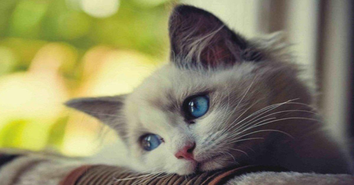 10 cose da non fare al tuo gatto