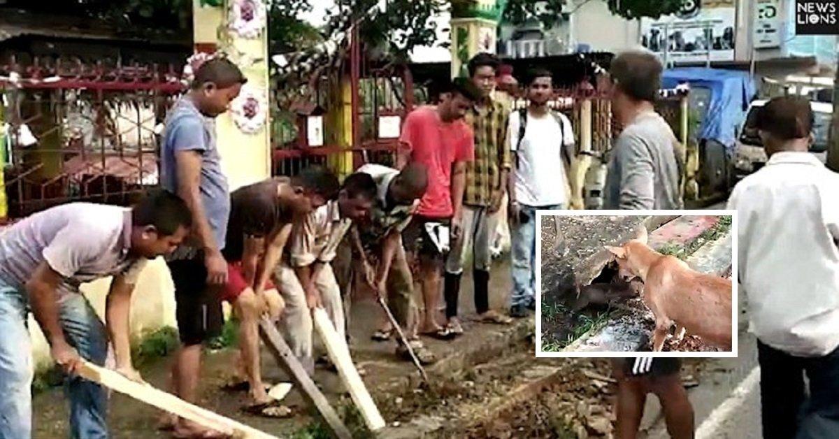 salvataggio-3-cuccioli-India