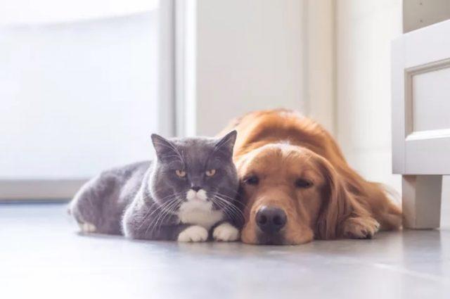 antiparassitari-cani-gatti