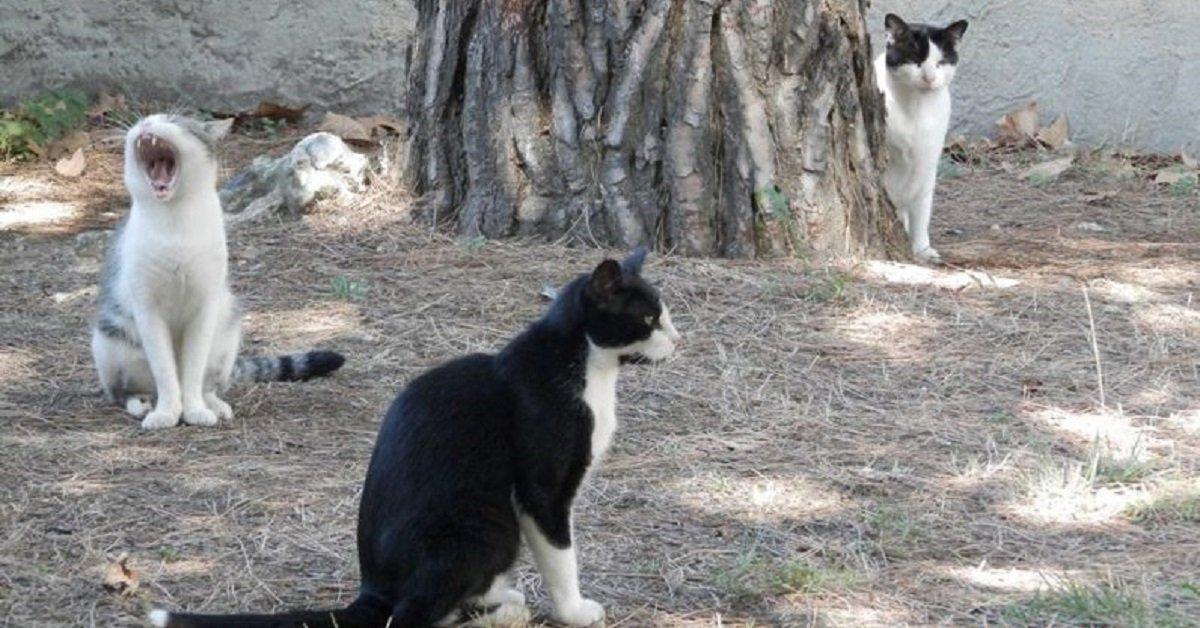 gatti-condannati-Viareggio