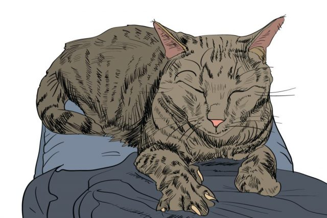 gatto che impasta con le zampe