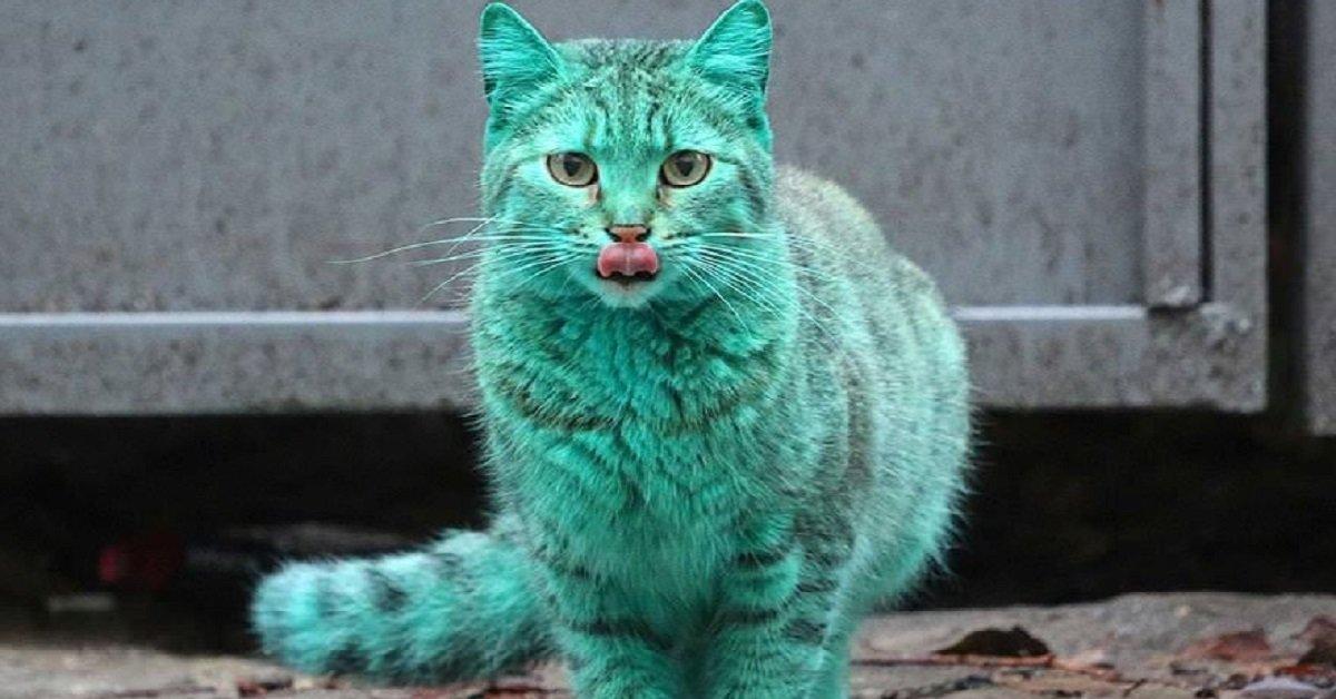 gatto-colorato