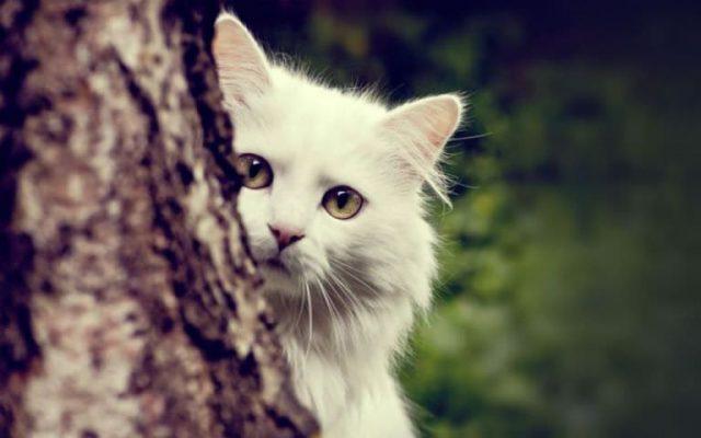 ignorare il gatto