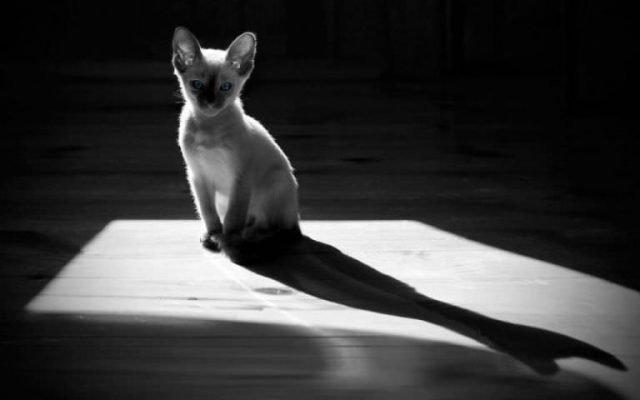 gatto a luci spente