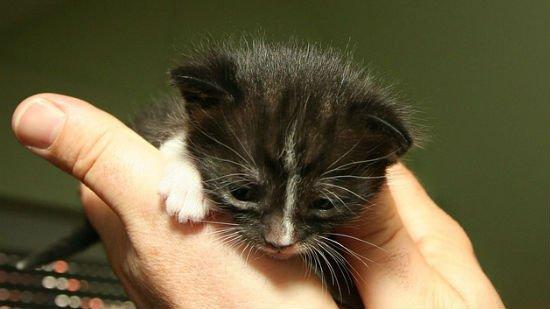 gatto-malato-coccidi