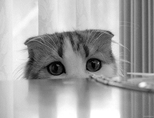 gatto che sente dolore