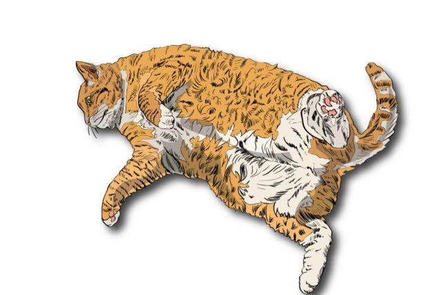 pancia del gatto