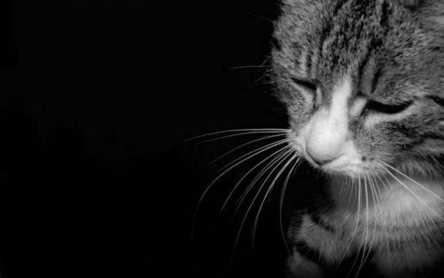 punire il gatto