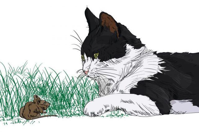 un gatto che porta un regalo al padrone