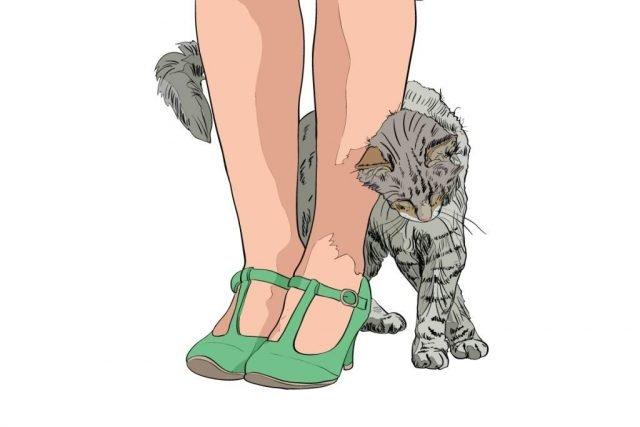 gatto che segue