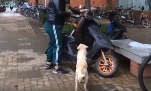 l'ultimo-saluto-di-una-cagnolina-al-suo-cucciolo