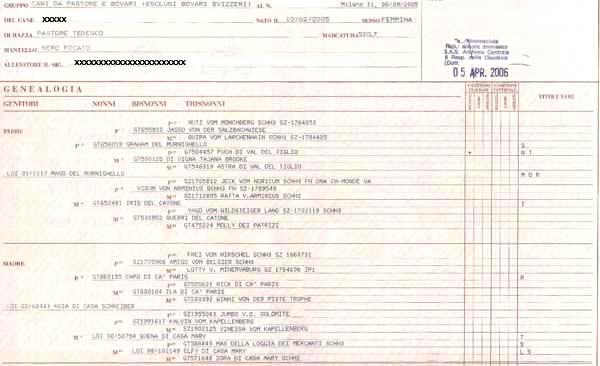 pedigree-cane-documento