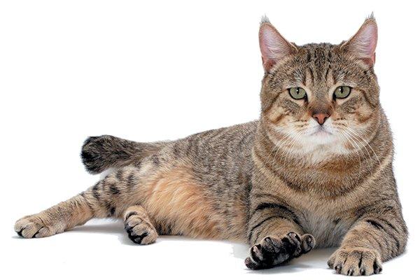rischia-la-vita-a-causa-di-una-malattia-contratta-dal-suo-gatto5