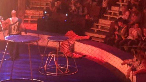 lo-spettacolo-che-ha-scioccato-tutti-in-un-circo