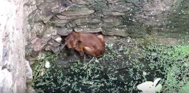 il-salvataggio-del-cagnolino-caduto-nel-pozzo