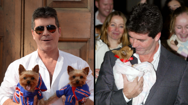 la-donazione-di-Simon-Cowell-per-la.fattoria-di-cani 1