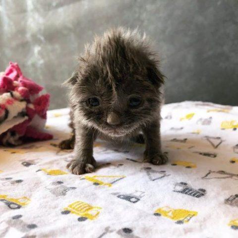 il-salvataggio-del-piccolo-Wolfie 1