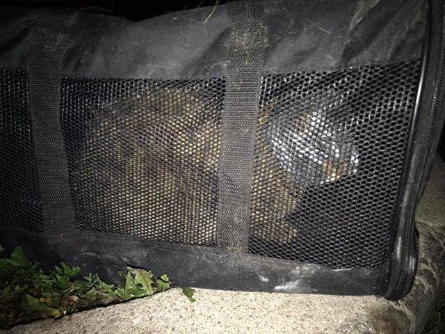 il-salvataggio-del-gattino-abbandonato-con-il-nastro-adesivo-sul-viso