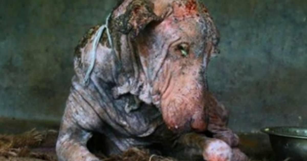la-trasformazione-del-cane-che-stava-per-morire