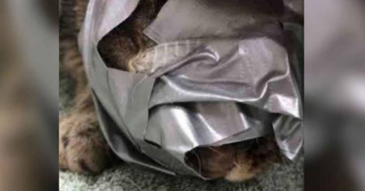 Il-terribile-abbandono-del-gattino