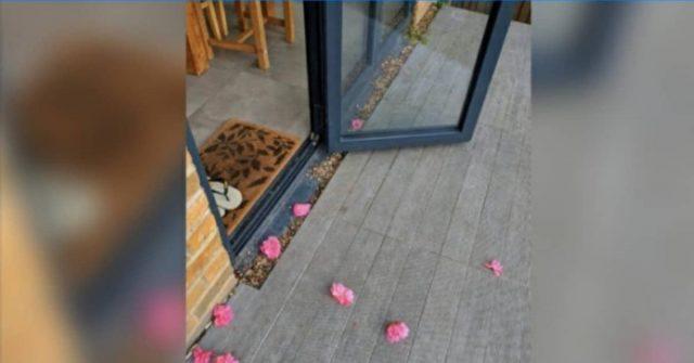 la-verità-che-scopre-Rosie-su-chi-le-lascia-i-fiori-nella-veranda