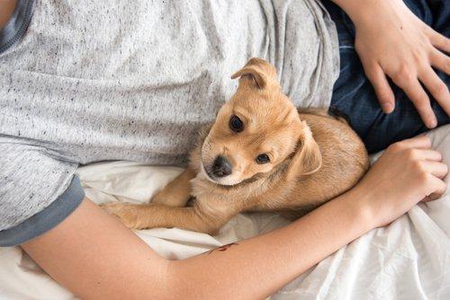 5-motivi-per-cui-dovresti-assolutamente-dividere-il-letto-con-il-tuo-cane