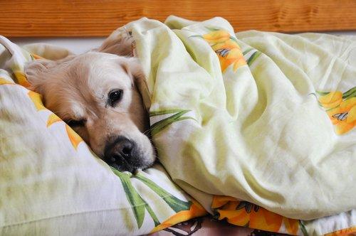 5-motivi-per-cui-dovresti-assolutamente-dividere-il-letto-con-il-tuo-cane1