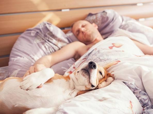 5-motivi-per-cui-dovresti-assolutamente-dividere-il-letto-con-il-tuo-cane4