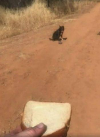 cagnolino-chiede-aiuto-per-il-suo-amico-umano-in-pericolo