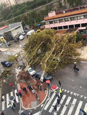 alberi-crollati