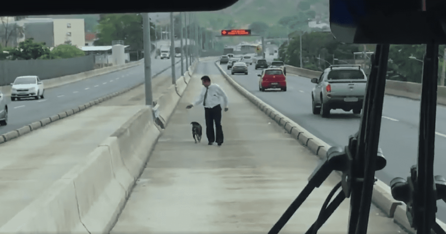 salva un cane dall'autostrada