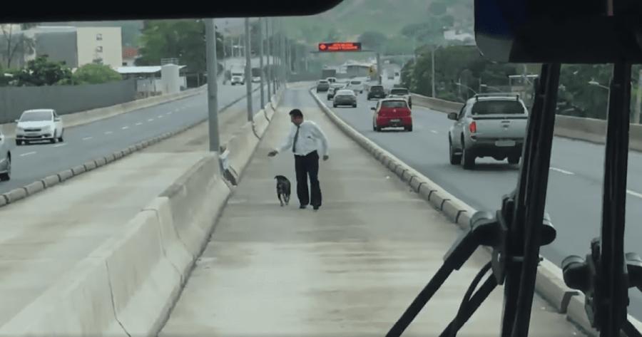 cane in autostrada