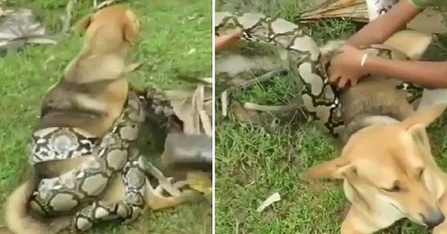 bambini-salvano-il-cane-dal-serpente