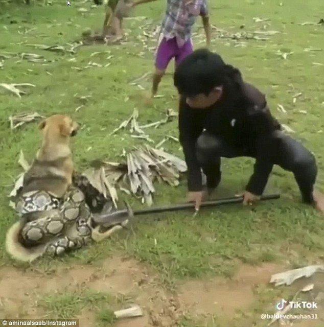 Bambini salvano il cane dal serpente