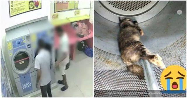3-ragazzi-uccidono-una-gattina-incinta 2